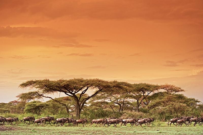 Serengeti photo safari
