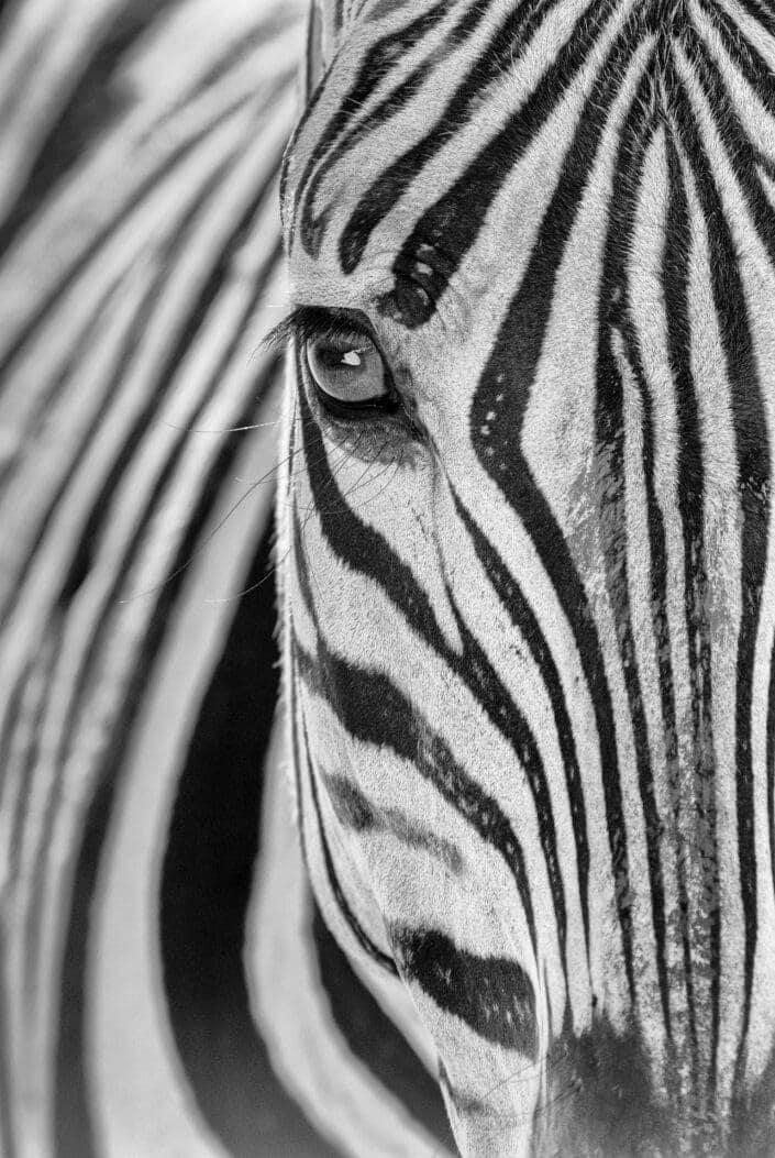 Zebra Soul - black and white wildlife prints