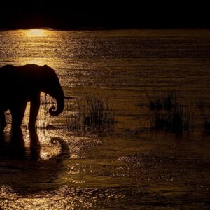 african wildlife silhouettes - Elephant Reflecting