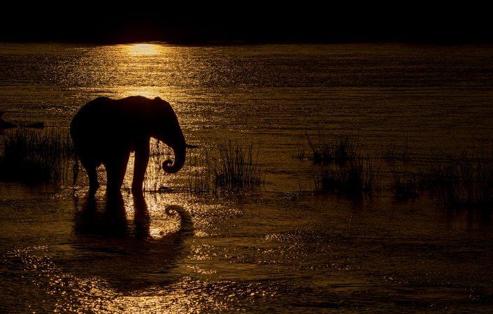 african wildlife silhouettes - Elephant Reflecting