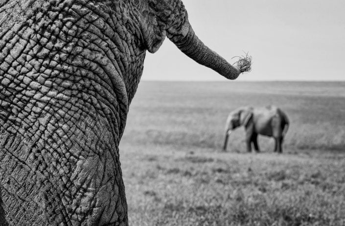 black and white animal photography prints - Tale End