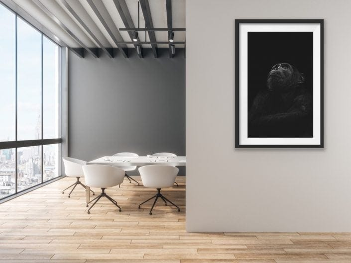 fine art wildlife prints - a chimpanzee black and white portrait.