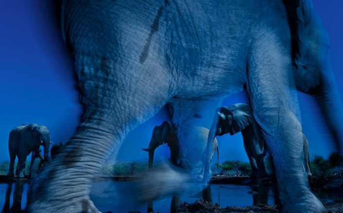 worlds best wildlife photographer - Essence Of Elephants