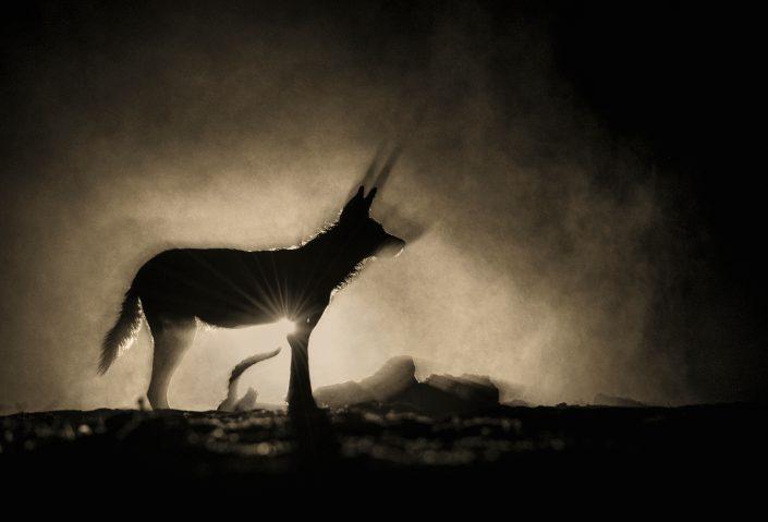 worlds best wildlife photographer - greg du toit