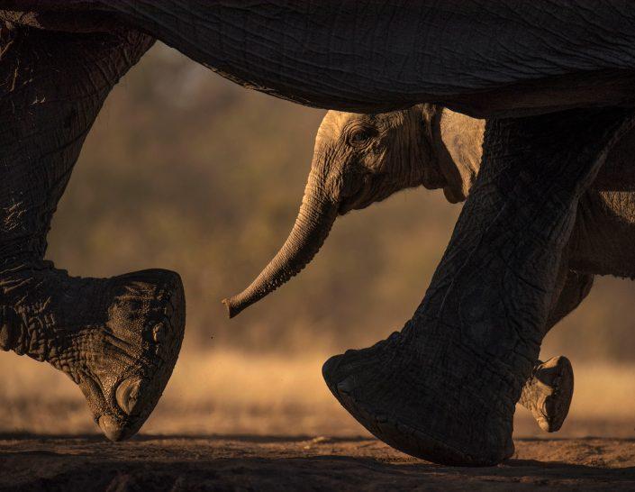 africa's best wildilife photographer