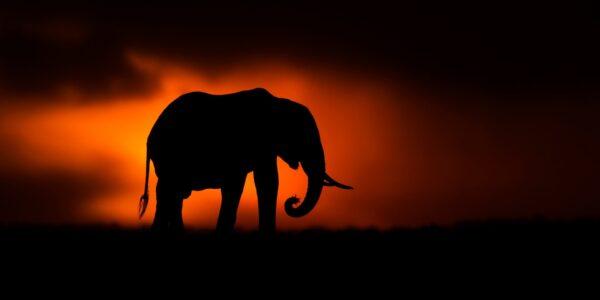 panoramic silhouette - Elephant Silhouette