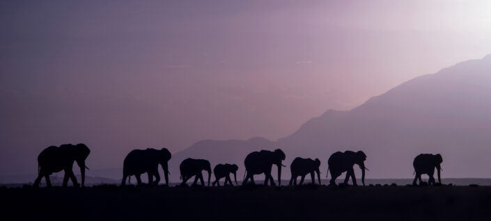 panoramic photo prints - Elephant Parade