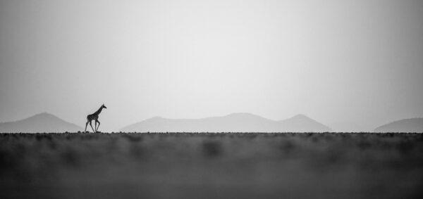 Keep Walking - panoramic photography prints