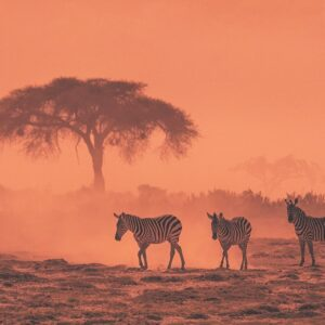 African Dream -panoramic wildlife photographer