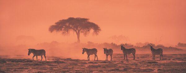 panoramic wildlife photographer - African Dream