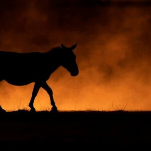 Zebra in the Dust - panoramic wildlife photographer Africa