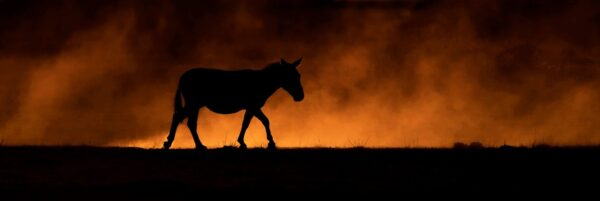 Zebra in the Dust - panoramic wildlife photographer Africa