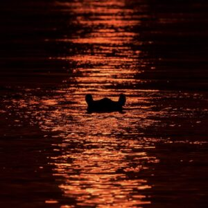 Hippo at Sunset - Africa photography gallery