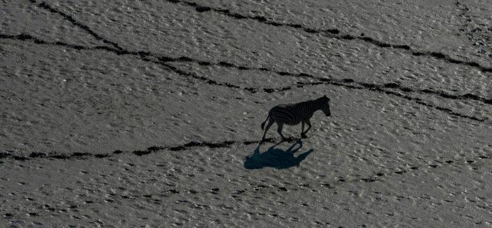 zebra pano - Zebra Trails