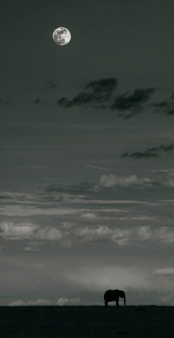 Mara Moon - online wildlife prints