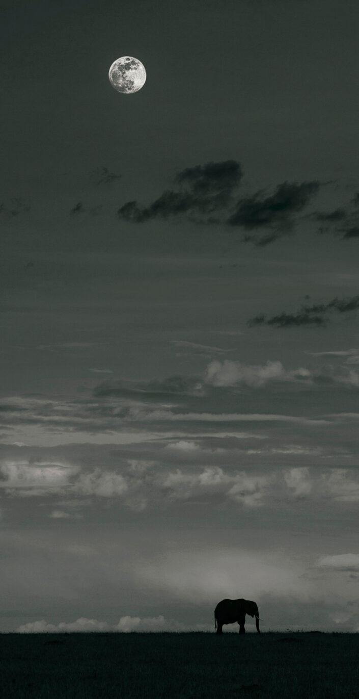 vertical pano prints - Mara Moon
