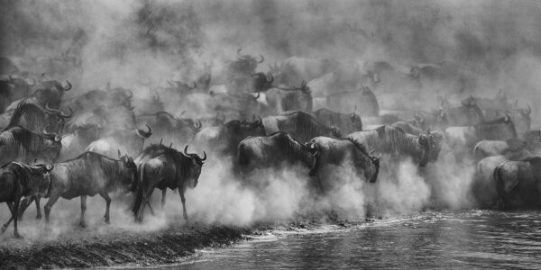panoramic photography - Great Migration