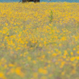 elephant pano - Smelling the Flowers