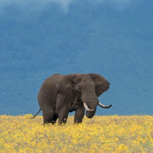 Elephant Bliss - African photography gallery
