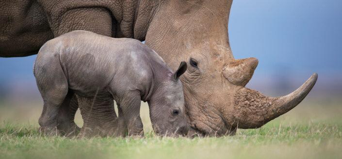 Side by Side - online fine art wildlife gallery