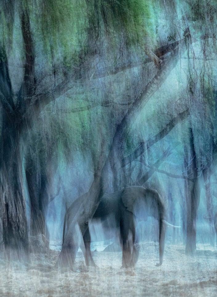Vanishing Elephant - African wildlife photography for sale.