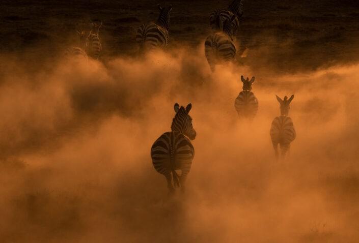 top african wildlife photographer
