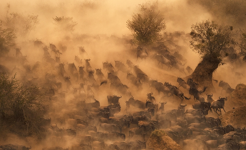 The best African wildlife photography safaris includes the great migration depicted here.