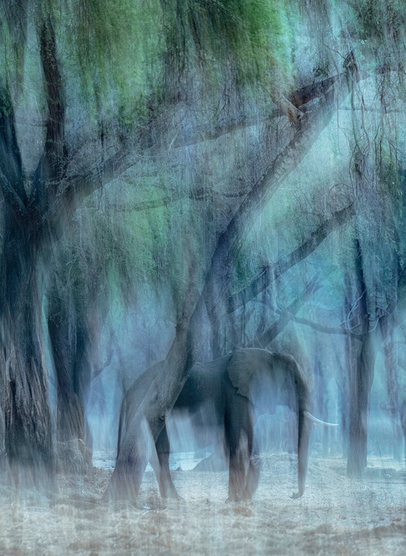A photo of an elephant taken on an African photographic safari