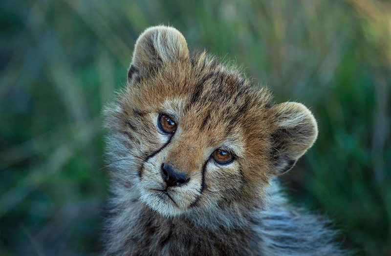 Which African country is best for safaris?