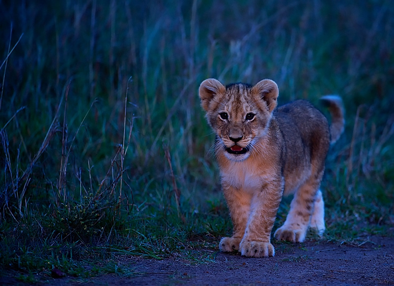 African photo safari cost