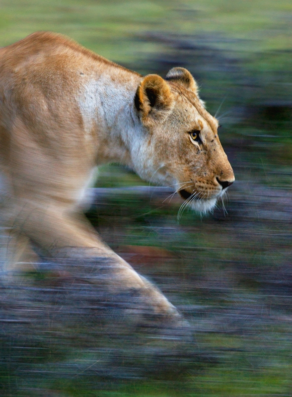 Which African country is best for safaris