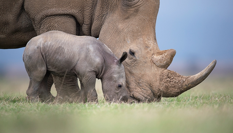A private photographic safaris experience