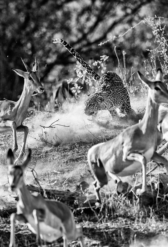 Best African wildlife photography safaris