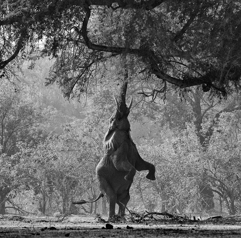 private photographic safaris picture
