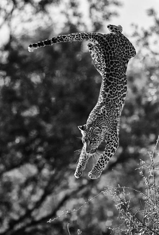 best African photo safaris