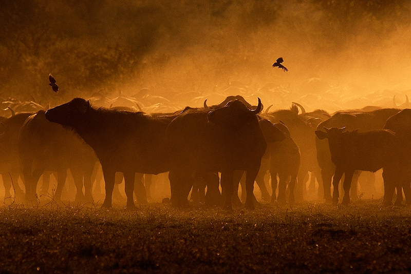private photographic safaris scene