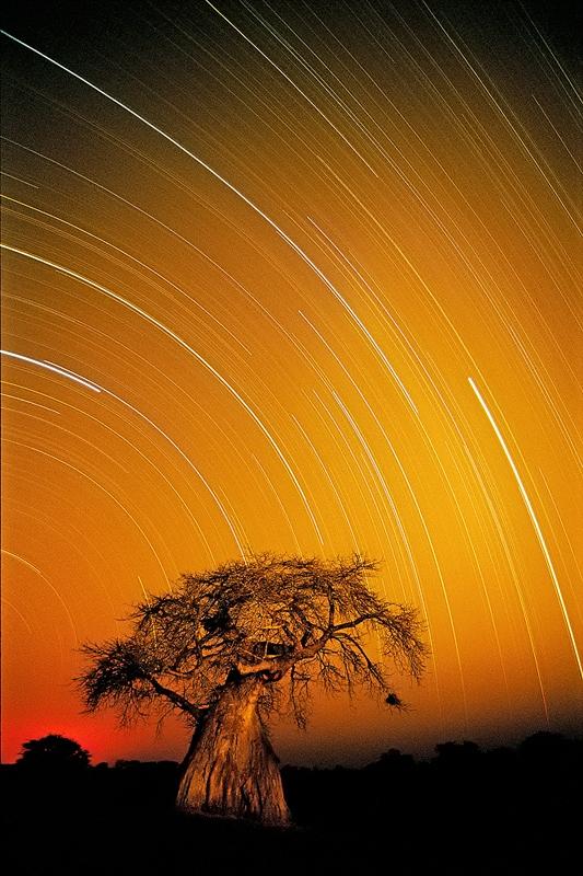 Ruaha photo safari baobab startrail
