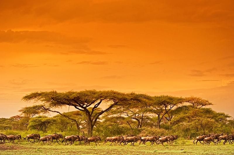 African photographic safaris scene of the serengeti