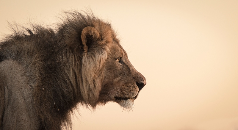 The best African photo safaris gave you photos like this.