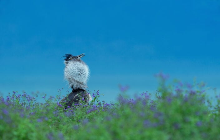 african birdlife photographers