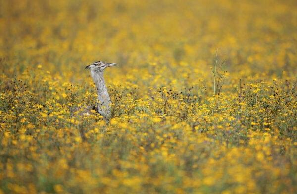 best african bird photographer