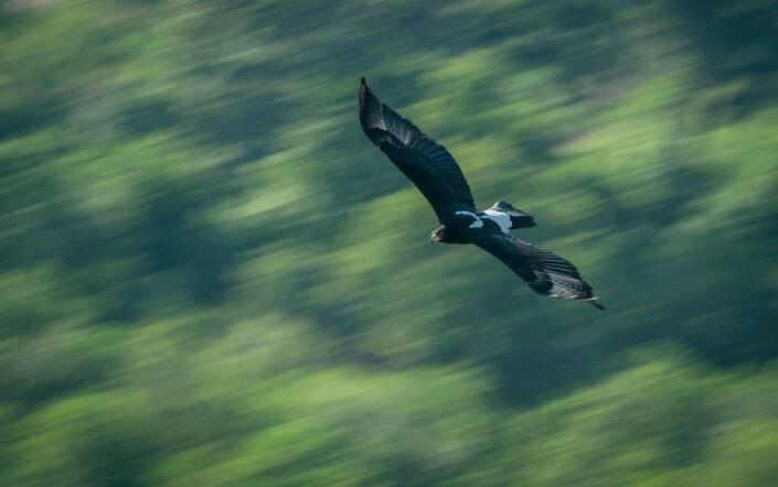 africa bird photography