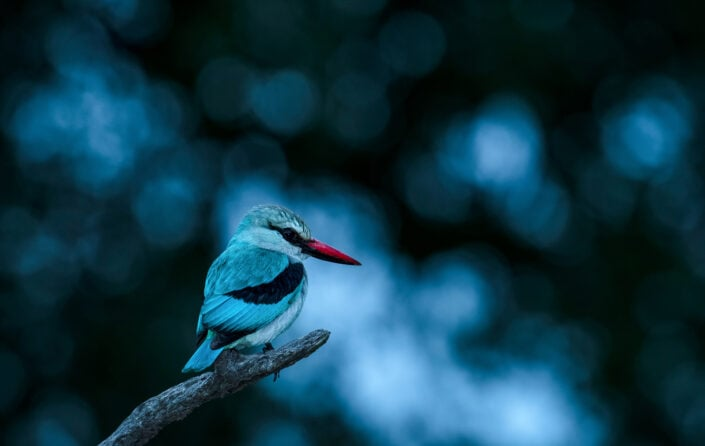africa bird photo safari