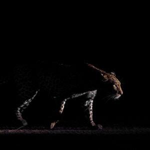 low-light wildlife photography