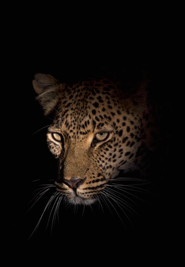 night wildlife photography