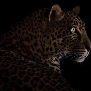 low light wildlife photography