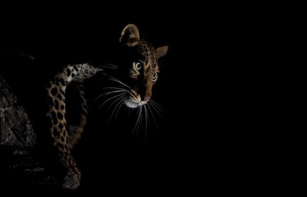 leopard photo safari