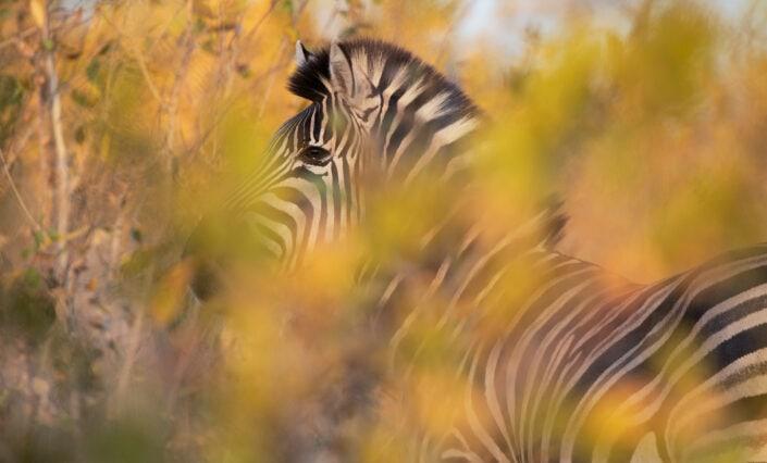 wildlife in autumn