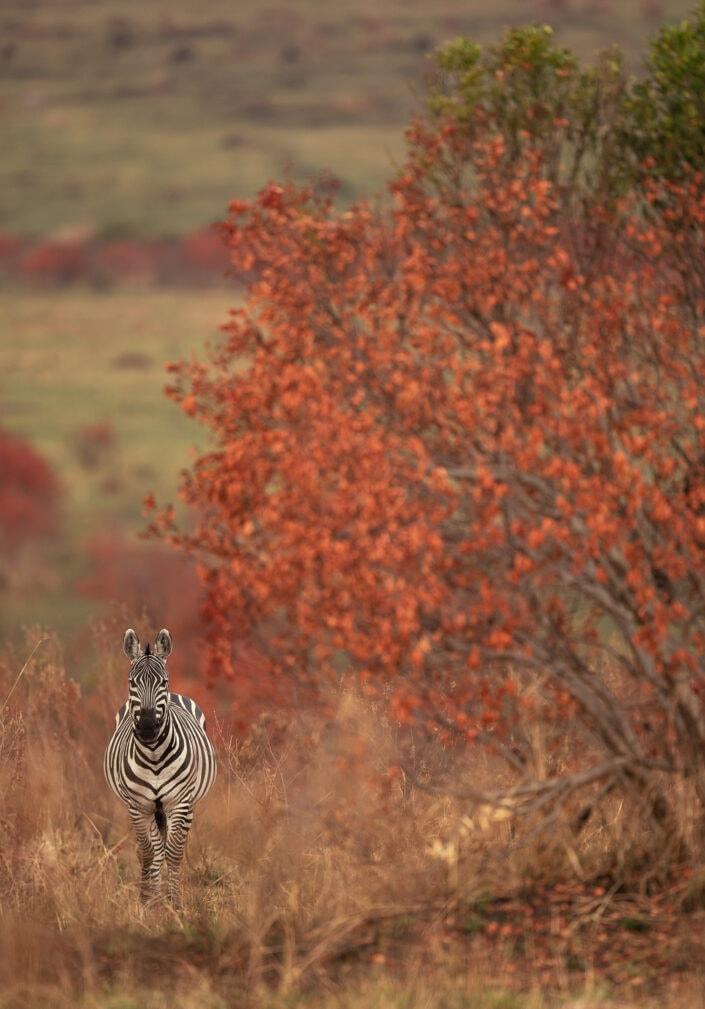 wildlife in fall